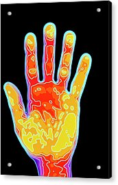 Computer Graphic Of Hand Mapped With Contour Lines Acrylic Print