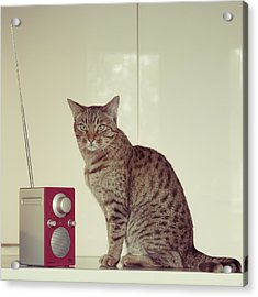 Concentrated Listener Acrylic Print by Ari Salmela