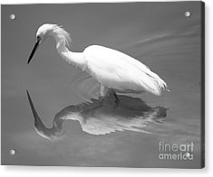 Concentration Acrylic Print by Carol Groenen