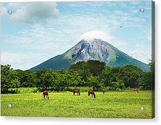 Concepcion Volcano With Grazing Horses Acrylic Print