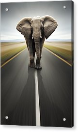 Heavy Duty Transport / Travel By Road Acrylic Print by Johan Swanepoel