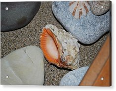 Acrylic Print featuring the photograph Conch 1 by George Katechis