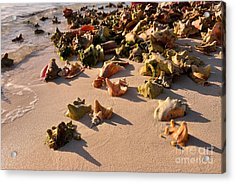 Conch Collection Acrylic Print by Jola Martysz