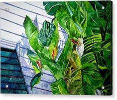 Conch House Tour Acrylic Print