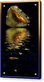 Acrylic Print featuring the photograph Conch Sparkling With Reflection by Peter v Quenter