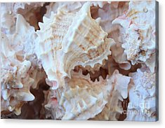Conches Acrylic Print by Carol Groenen