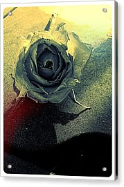 Concrete Rose Acrylic Print by Lee Farley