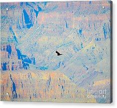 Condor Series H Acrylic Print