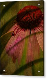 Cone Flower And The Ladybug Acrylic Print by Lesa Fine