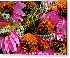 Cone Flowers And Mint Acrylic Print