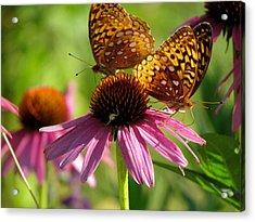 Coneflower Butterflies Acrylic Print by David T Wilkinson