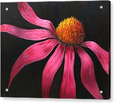 Coneflower Acrylic Print by Marie-louise McHugh