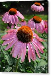 Conehead Daisy Acrylic Print