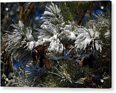 Cones Acrylic Print by Skip Willits