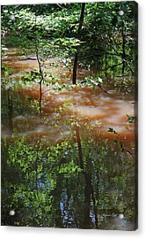 Congaree Swamp In Flood Conditions Acrylic Print by Suzanne Gaff