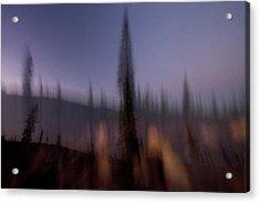 Conifer Trees In Lassen Volcanic Acrylic Print