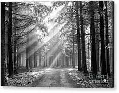 Coniferous Forest In Early Morning Acrylic Print by Michal Boubin