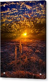 Connected Acrylic Print by Phil Koch