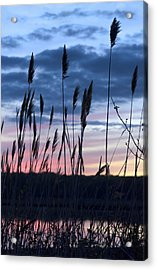 Connecticut Sunset With Reeds Series 4 Acrylic Print by Marianne Campolongo