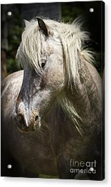 Acrylic Print featuring the photograph Consideration by Carrie Cranwill