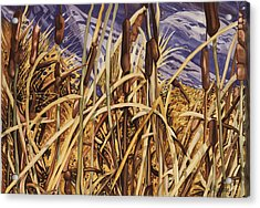 Contemplating Cattails Acrylic Print