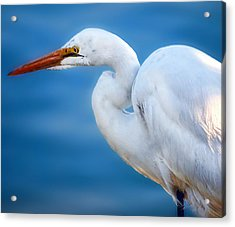 Contemplating Flight Acrylic Print by Camille Lopez
