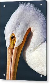 Contemplating  Acrylic Print by Tammy Espino