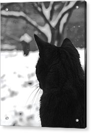 Contemplating Winter Acrylic Print