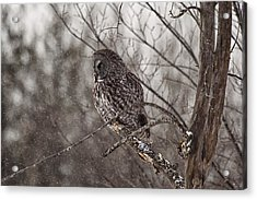 Contemplating Winter Acrylic Print by Eunice Gibb