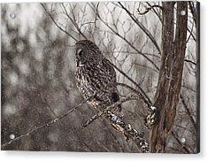 Contemplating Winter Acrylic Print