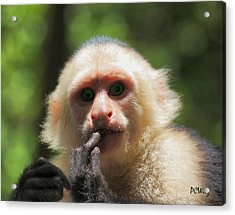 Acrylic Print featuring the photograph Contemplation by Patrick Witz