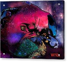 Contemplative Boxer Dog Acrylic Print by Marlene Watson