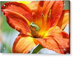 Acrylic Print featuring the photograph Content by Kathy Gibbons