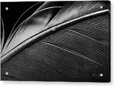 Contour Feather Acrylic Print