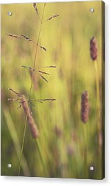 Contrario - Gr02a Acrylic Print by Variance Collections