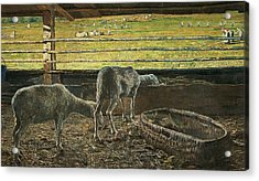 Contrast Of Light Acrylic Print by Giovanni Segantini
