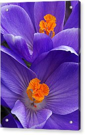 Contrasting Colors Acrylic Print by Kathi Mirto