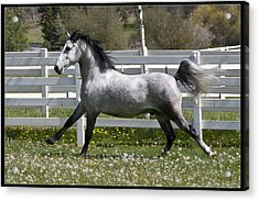 Acrylic Print featuring the photograph Conversano Catalina IIi D4000 by Wes and Dotty Weber