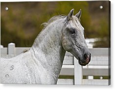 Acrylic Print featuring the photograph Conversano Mima D2724 by Wes and Dotty Weber