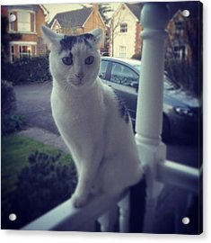Cookie Being Bare Stunnahz #cat #porch Acrylic Print