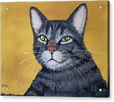 Cool Cat Acrylic Print by Anastasiya Malakhova