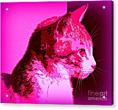 Cool Cat Acrylic Print by Clare Bevan