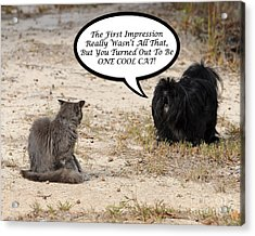 Cool Cat Rhyme Greeting Card Acrylic Print by Al Powell Photography USA