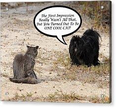 Cool Cat Rhyme Greeting Card Acrylic Print