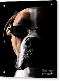 Cool Dog Acrylic Print by Jt PhotoDesign