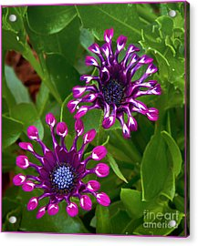 Cool Flowers Acrylic Print by Timothy J Berndt