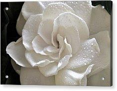Cool Gardenia Acrylic Print
