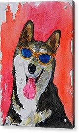 Cool Husky 3 Acrylic Print by Warren Thompson