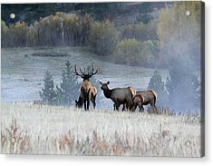 Acrylic Print featuring the photograph Cool Misty Morning by Shane Bechler