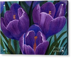 Cool Purple Crocus Acrylic Print by Vikki Wicks